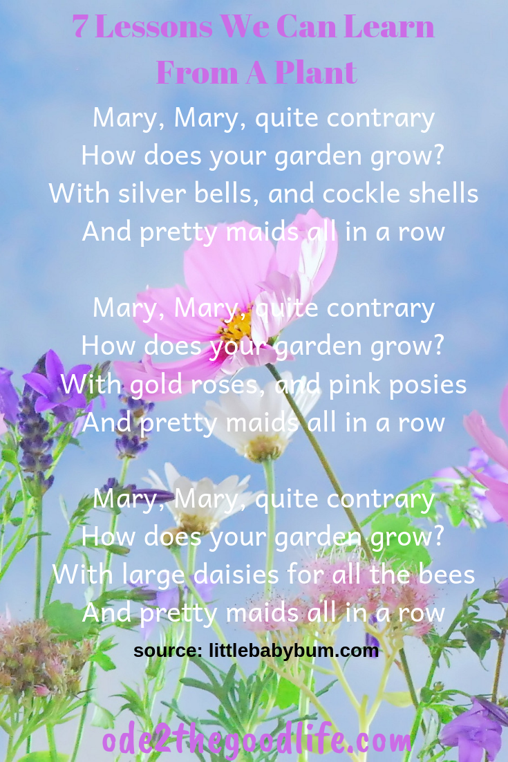 Flower background with the poem Mary, Mary quite contrary